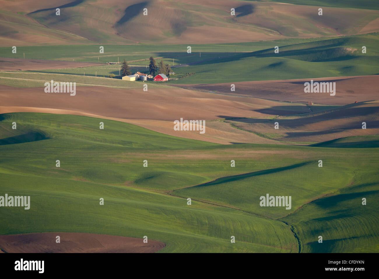 Rolling hills, The Palouse, Whitman County, Washington State, United States of America, - Stock Image