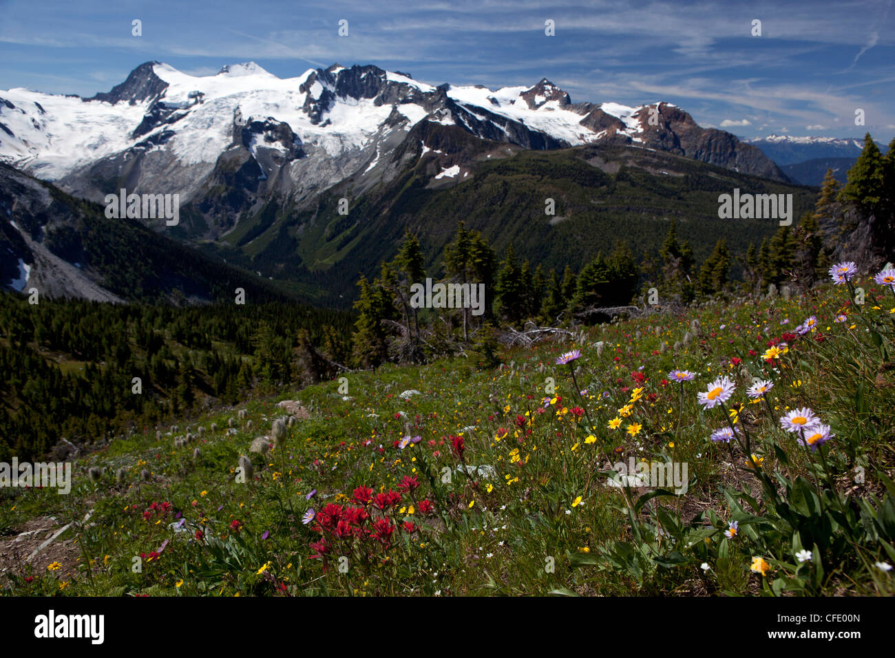 Meadows and Horseshoe Glacier, Jumbo Pass, Purcell Mountains, British Columbia, Canada - Stock Image