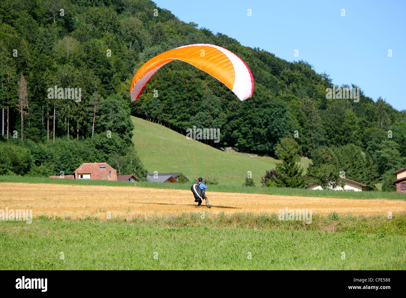 Red and white paraglider landing in a yellow field in the campain Stock Photo