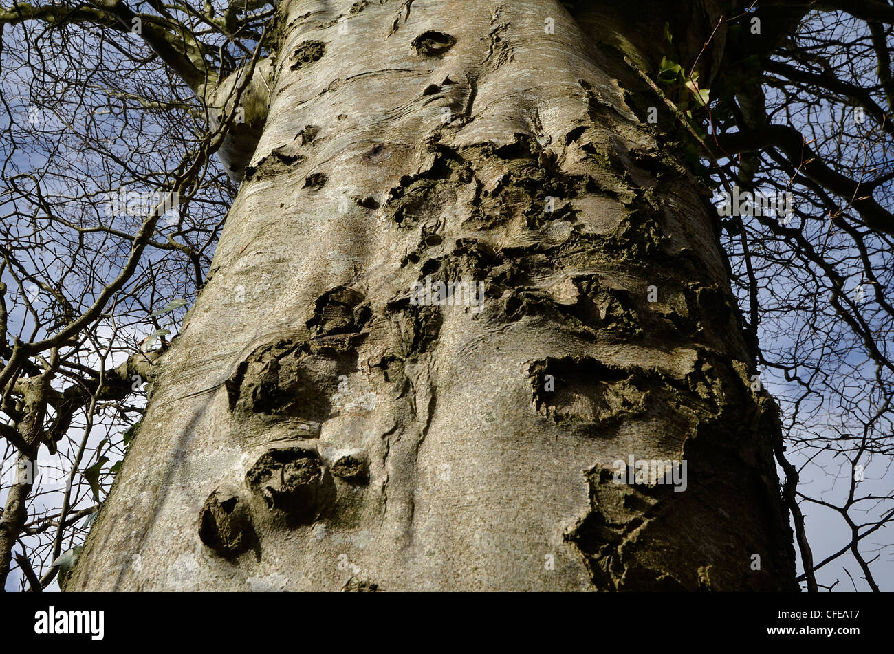 Bark surface of tree trunk during winter-spring period. [FOCUS POINT note in Description.] Bark texture background, - Stock Image
