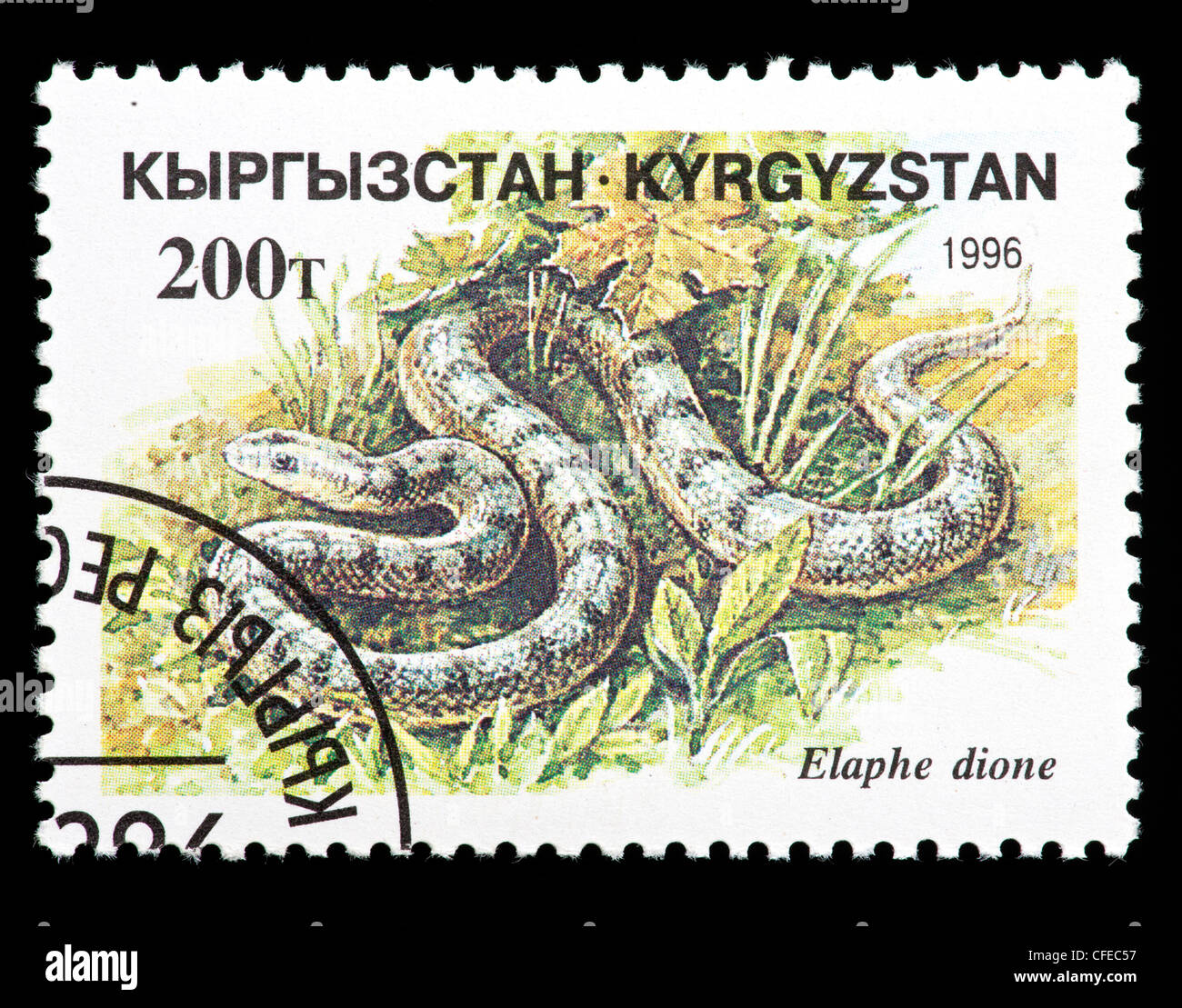 Postage stamp from Kyrgystan depicting Dione Ratsnake or Steppes Ratsnake (Elaphe dione) - Stock Image