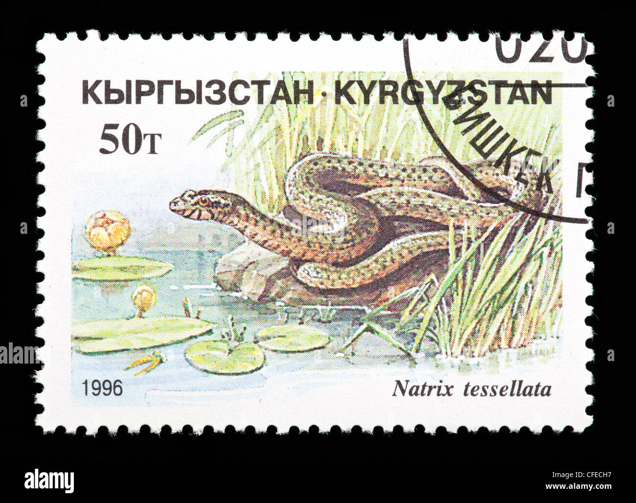 Postage stamp from Kyrgyzstan depicting a dice snake (Natrix tessellata) - Stock Image