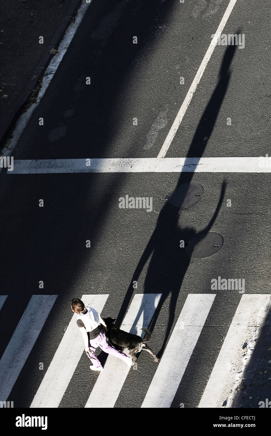Woman and dog on zebra crossing with long shadow Stock Photo