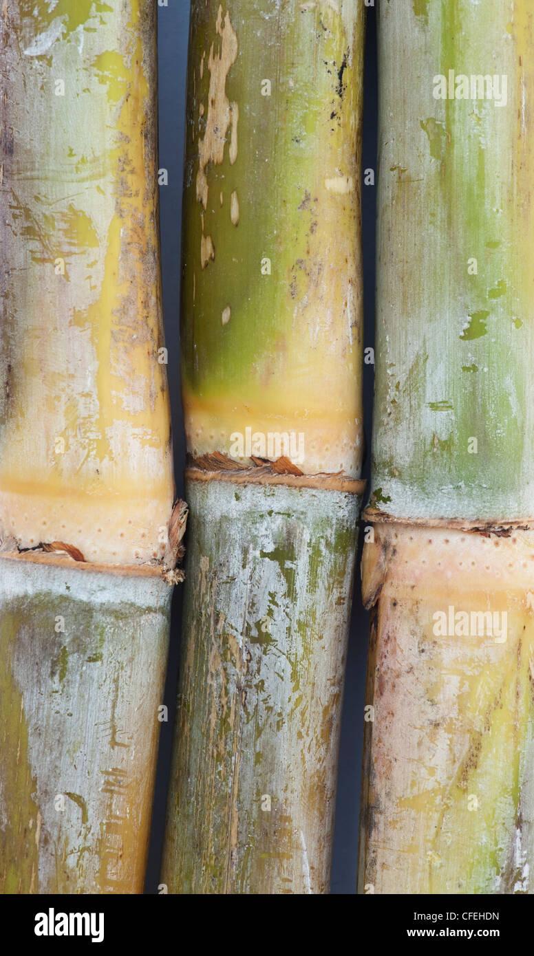 Sugarcane - Stock Image