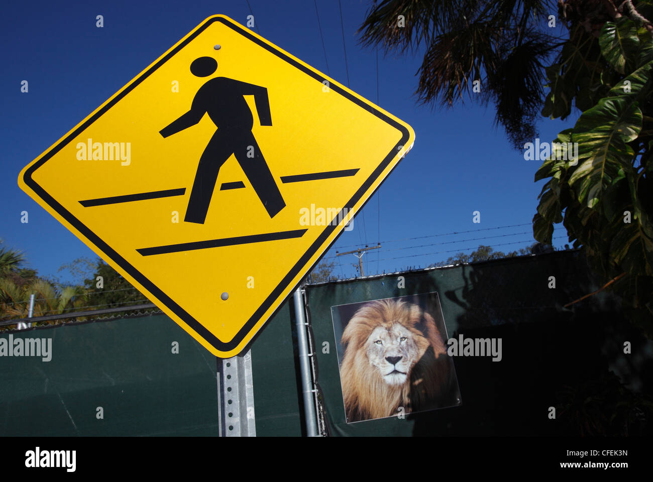 Pedestrian crossing sign and a picture of a lion outside the Naples Zoo, Naples, Florida - Stock Image