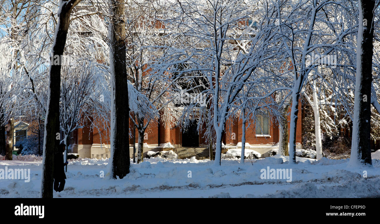 Harvard Yard, the old center of Harvard University campus, frosted in snow the day after a blizzard. - Stock Image