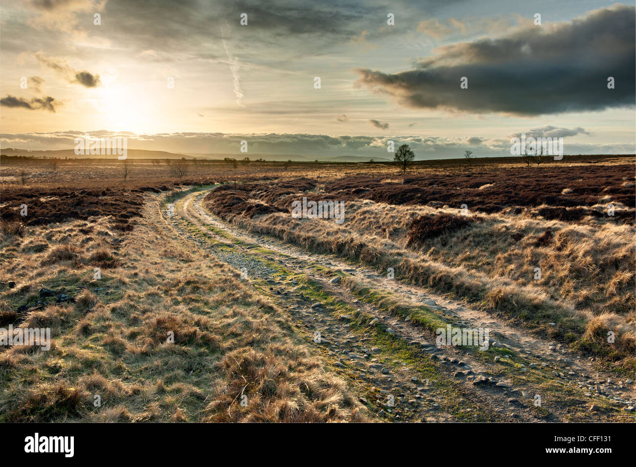 'Moss Road'   Public Bridleway at Totley Moss in Derbyshire 'Great Britain' - Stock Image