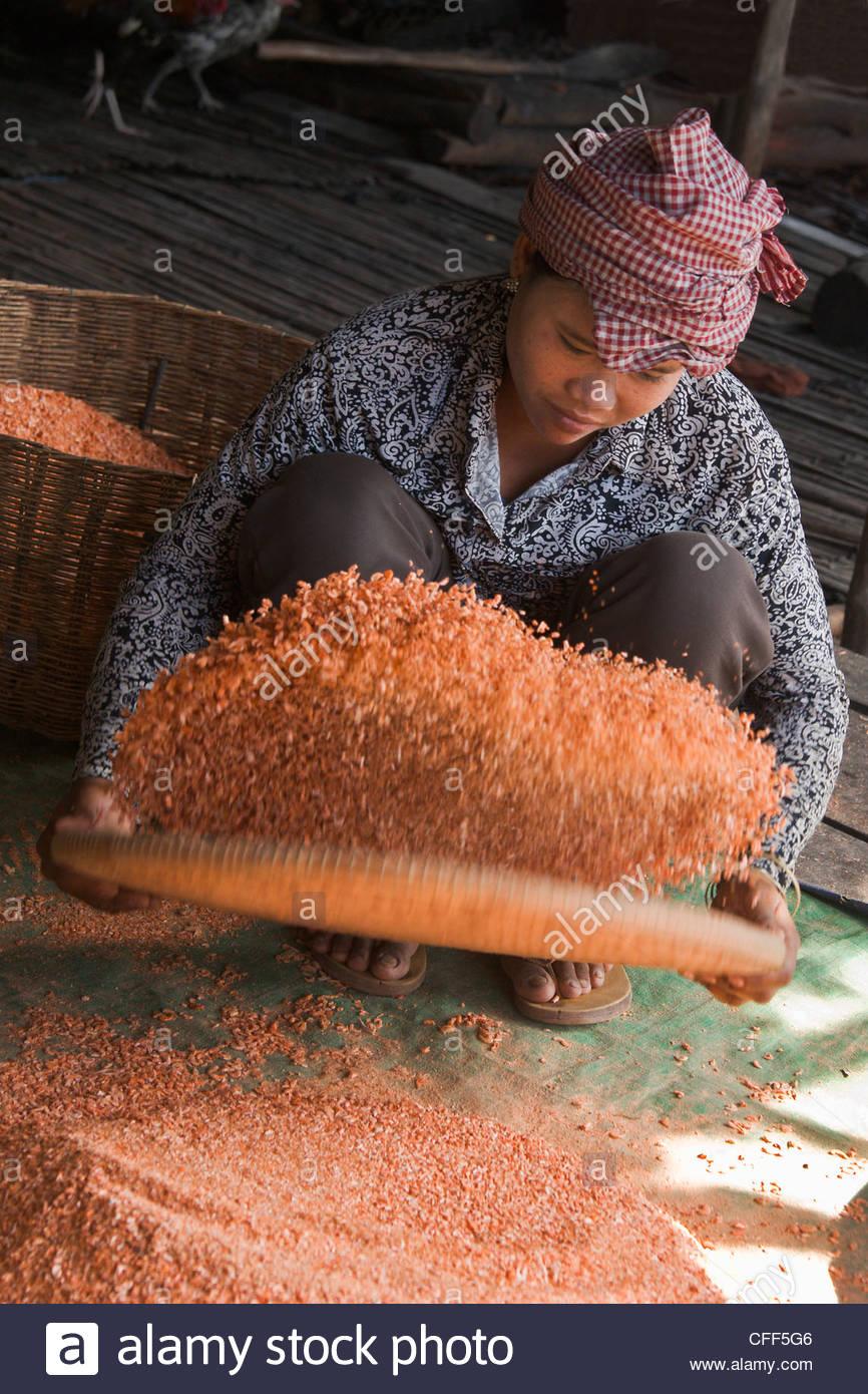 Girl drying shrimps, Tonle Lake,village communities, Siem Reap, Cambodia, Indochina, Southeast Asia, Asia - Stock Image