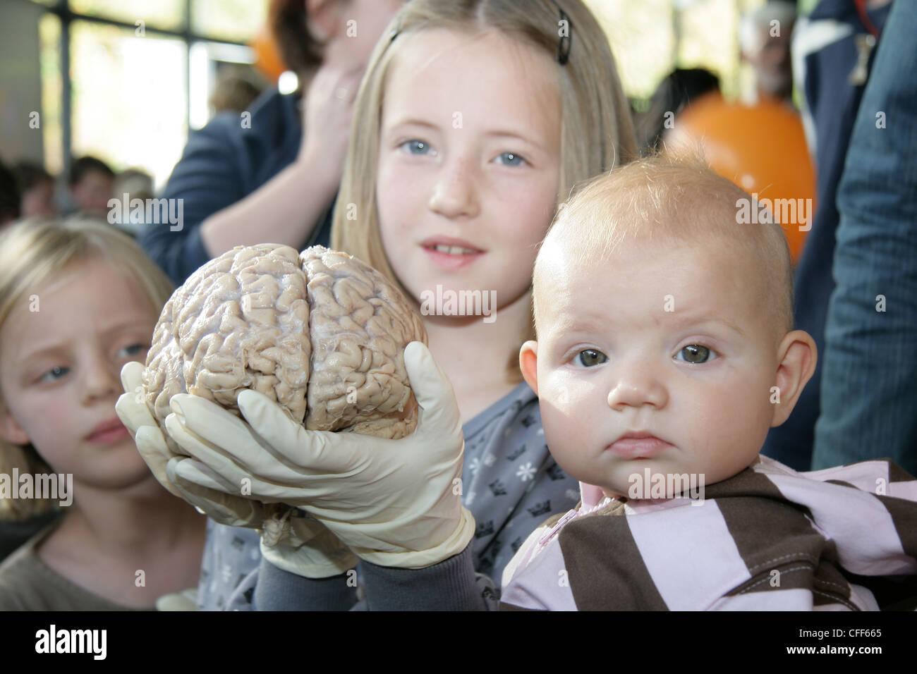 Brains,Intelligence,Hospital,Baby,Thinking,Cortex,Tabula rasa,Behavior,Mindful,Brain,Mindfulness, - Stock Image