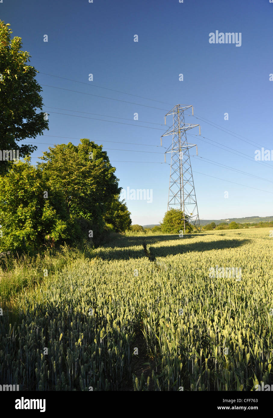 Corn field with distant Electricity Pylon, Technology and Nature working together - Stock Image