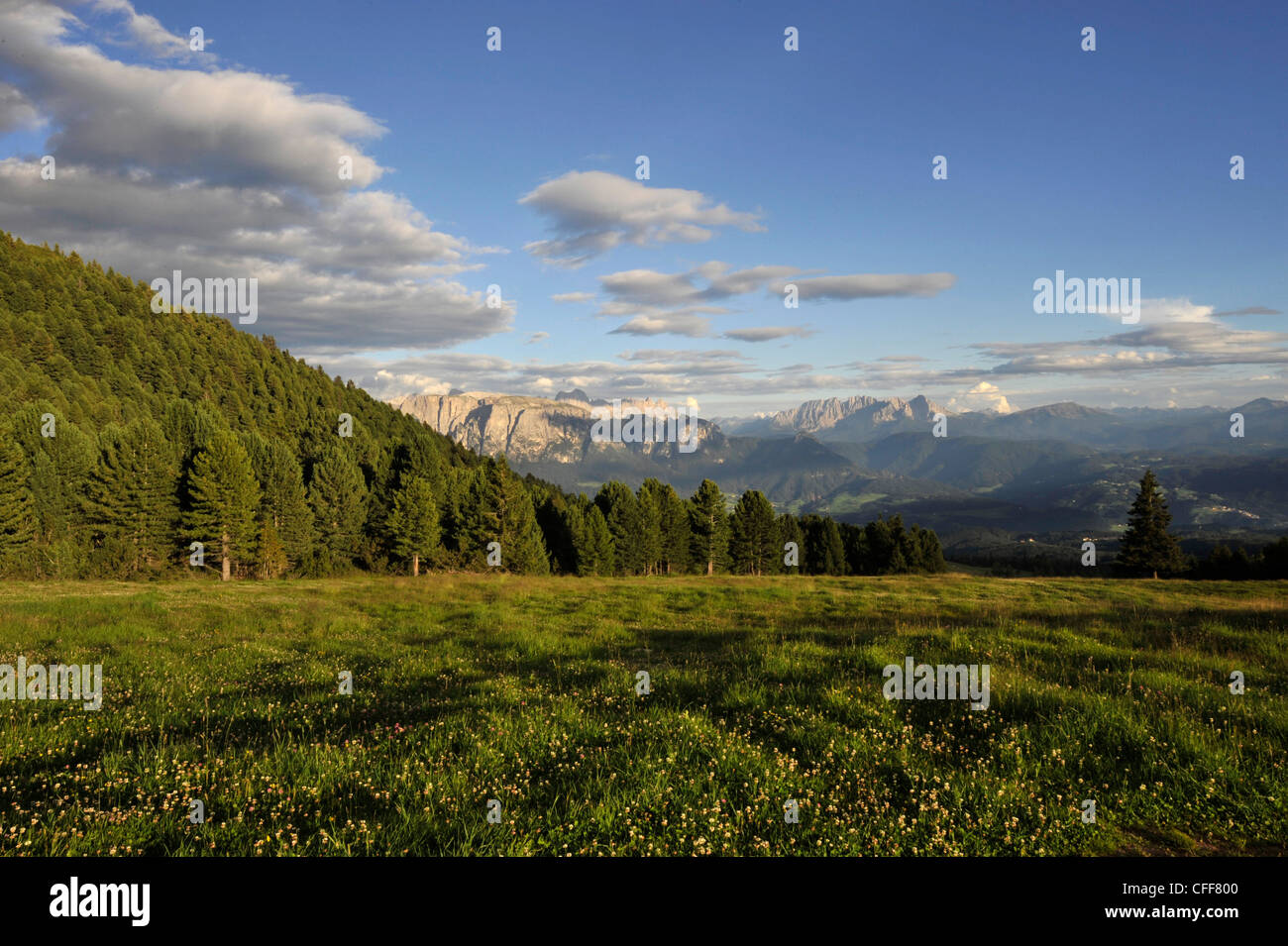 Alp meadow in the mountains, Alto Adige, UNESCO World Nature Site, South Tyrol, Italy - Stock Image