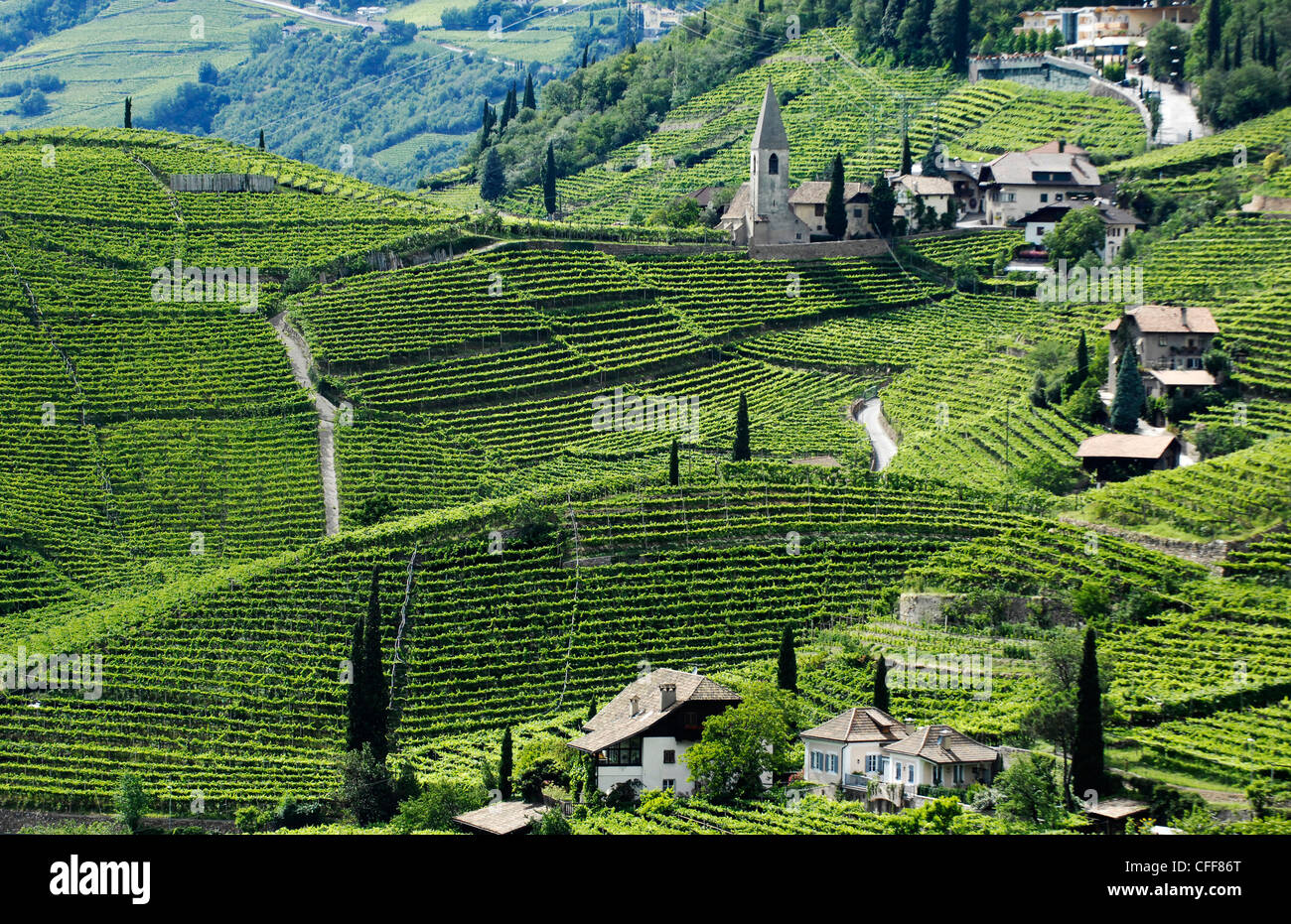 Vineyard and houses in the sunlight, Bolzano Rentsch, Dolomites, South Tyrol, Alto Adige, Italy, Europe - Stock Image