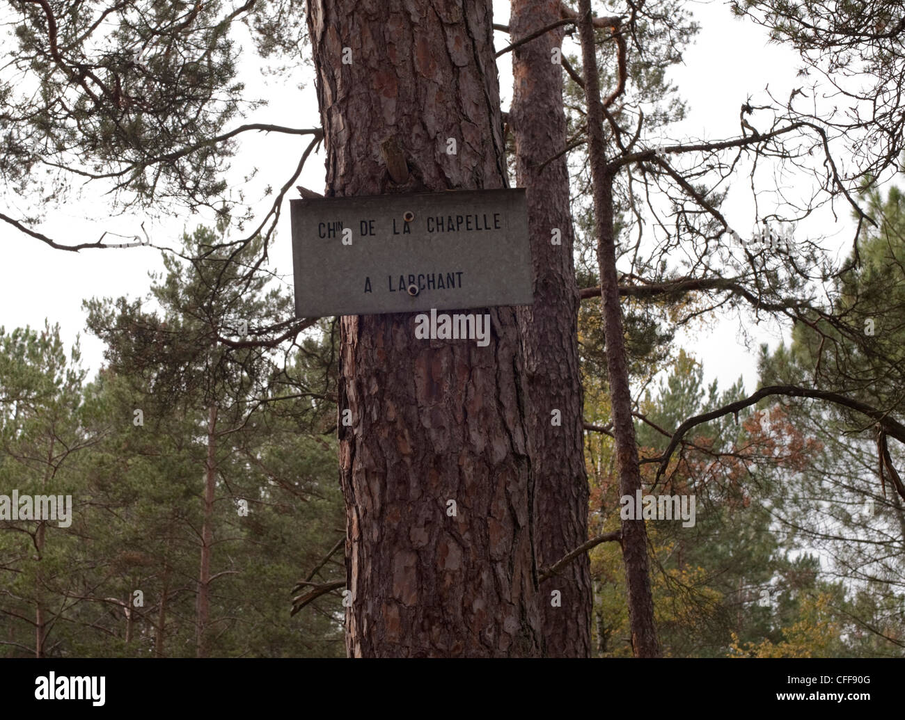 An old metal sign for de la chapelle a Larchant is nailed to a pine tree trunk in the forest at Fontainbleau - Stock Image