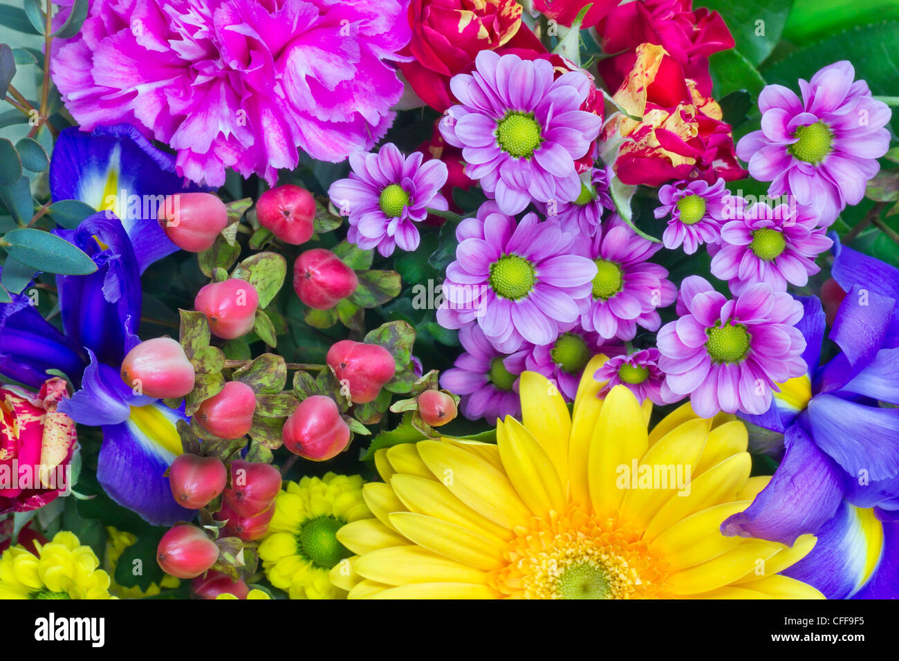 Magenta Pink Yellow Flowers Stock Photos Magenta Pink Yellow