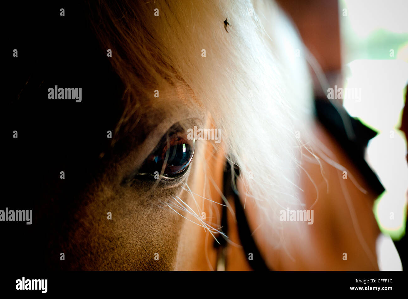 A horse waits in a stable. - Stock Image