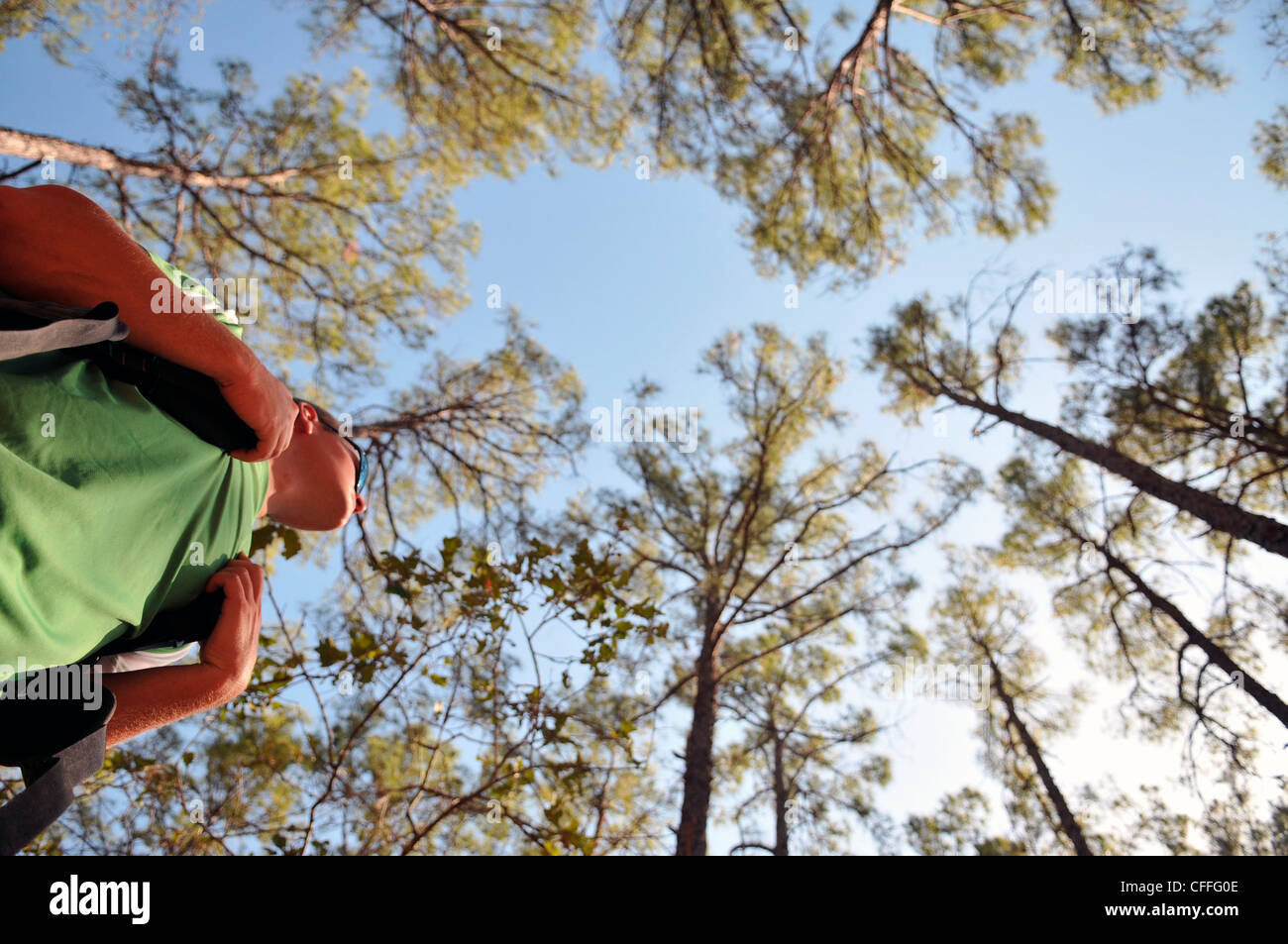 A backpacker stands under the tall pine trees at Bastrop State Park. - Stock Image
