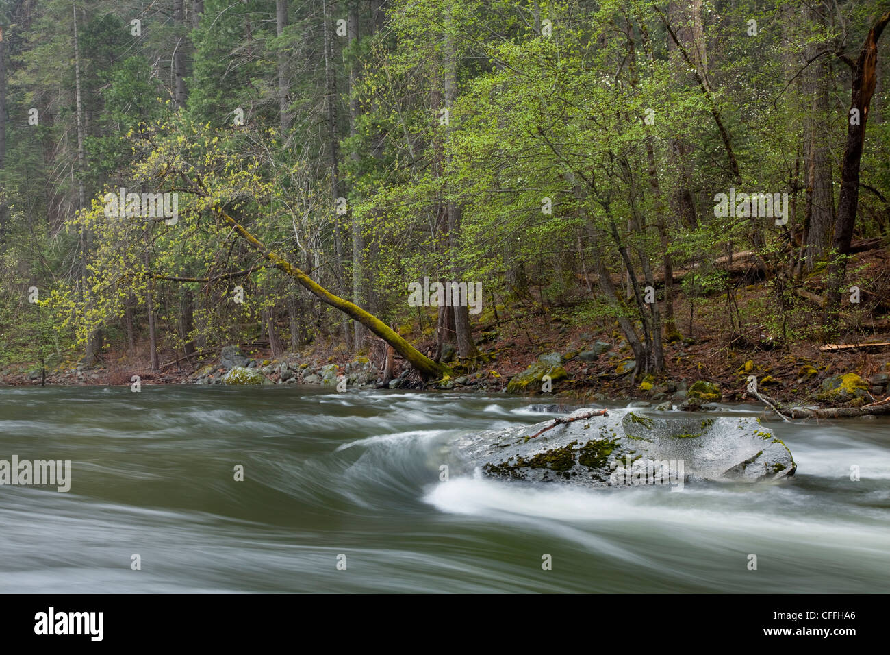 Scenic image of the Merced River flowing through Yosemite National Park, CA. - Stock Image