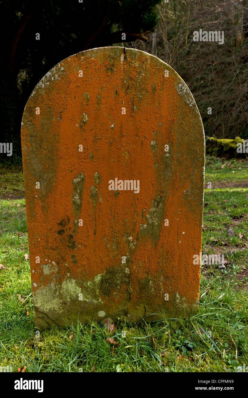 An orange filamentous alga, Trentepohlia aurea, on old gravestone at Culbone, Exmoor. - Stock Image