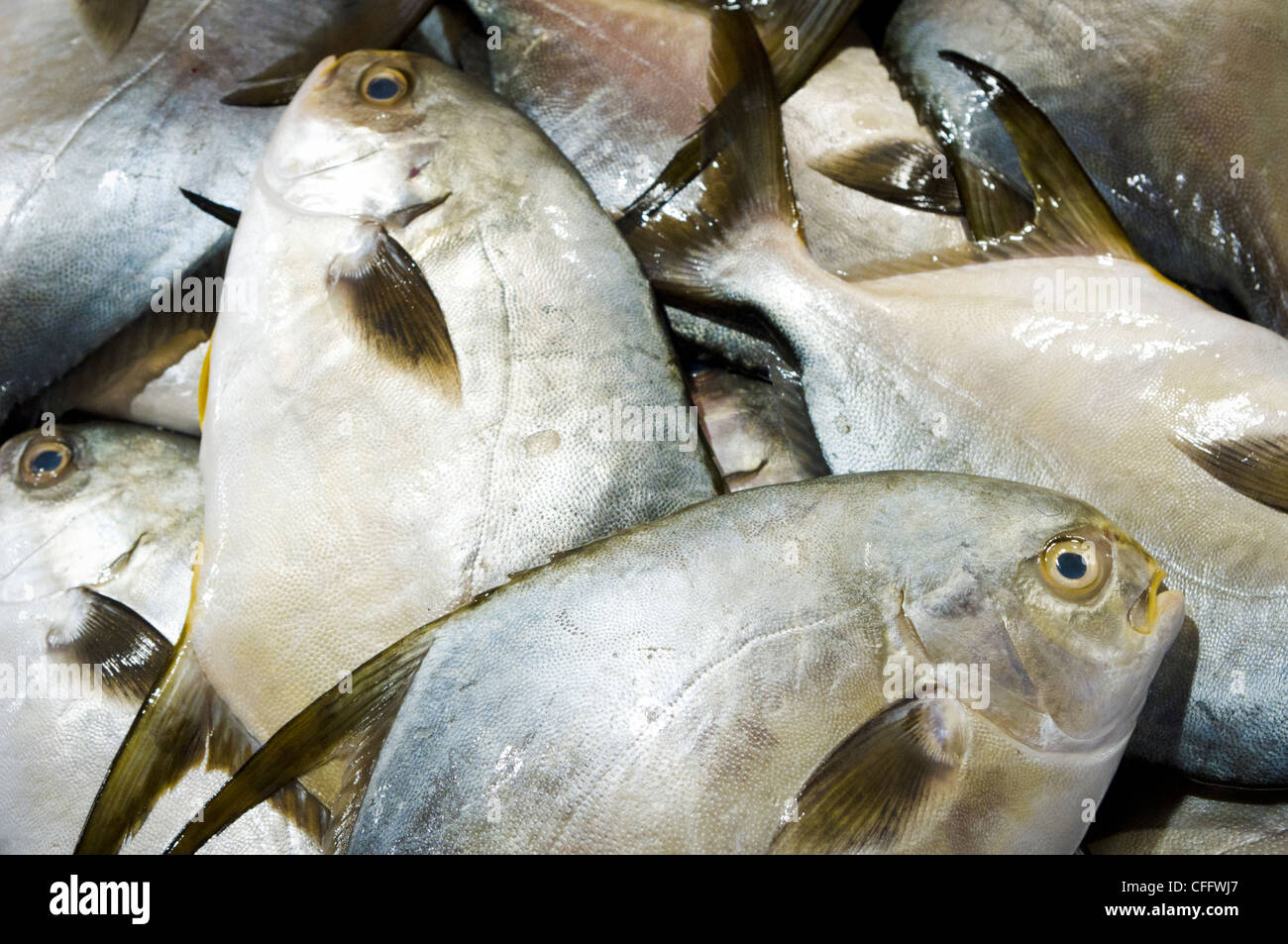 Pomfret fish for sale, in wet market of philippines. - Stock Image