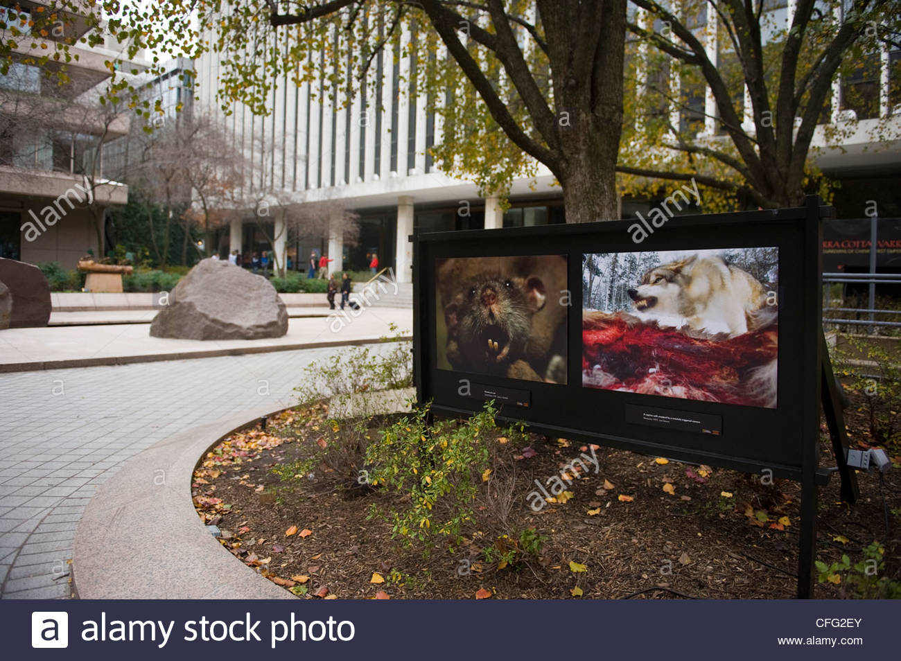 Outside the headquarters of the National Geographic Society. - Stock Image