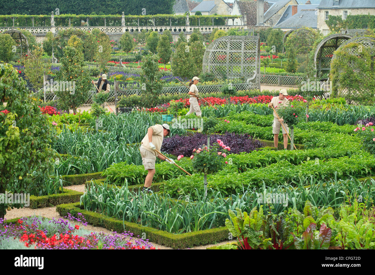 France, Gardens of the castle of Villandry, the gardeners in the kitchen garden treated like a 'jardin à - Stock Image