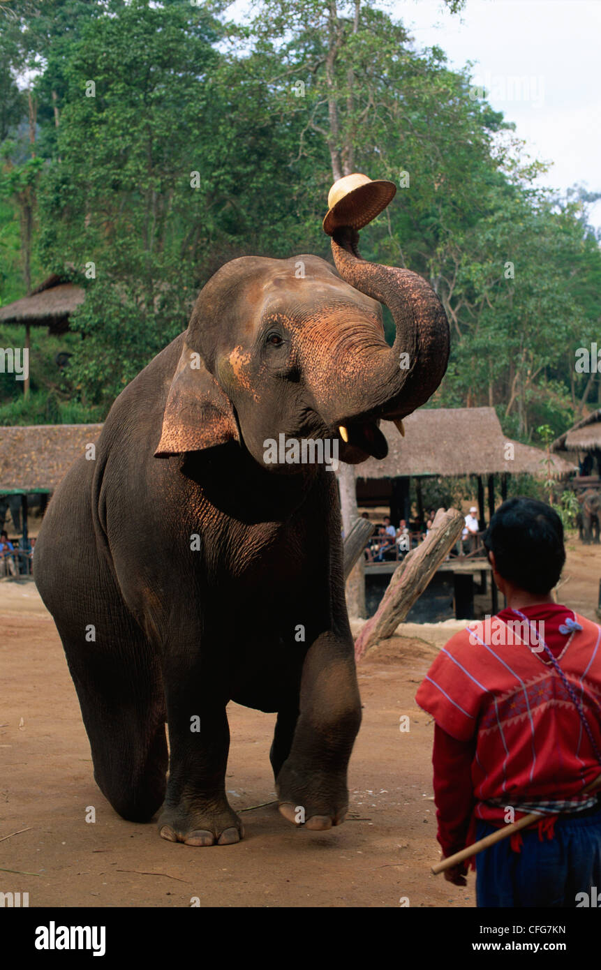 Thailand, Chiang Mai, Mae Sa Elephant Camp, Elephant Show - Stock Image