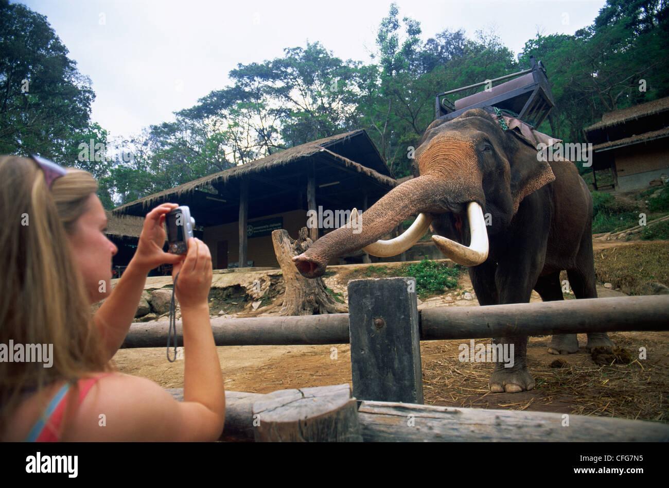 Thailand, Chiang Mai, Mae Sa Elephant Camp, Tourists Taking Photos of Elephant - Stock Image