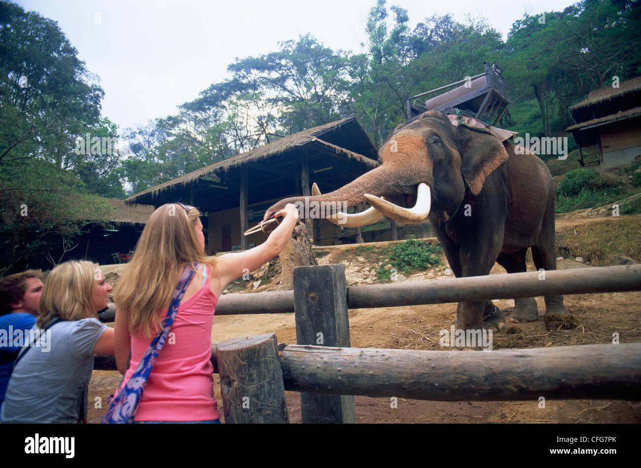 Thailand, Chiang Mai, Mae Sa Elephant Camp, Tourists Feeding Elephants - Stock Image