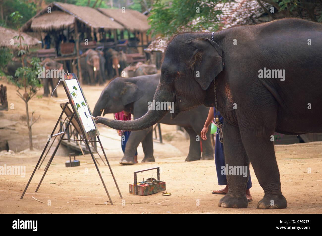 Thailand, Chiang Mai, Mae Sa Elephant Camp, Elephant Show, Elephant Painting with Trunk - Stock Image
