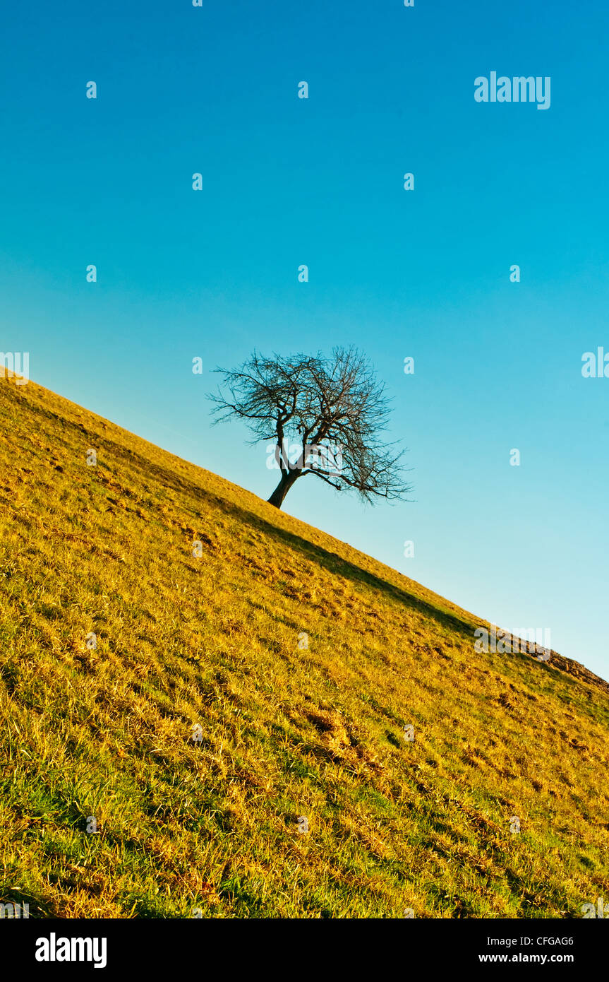 tree in oblique angle - Stock Image