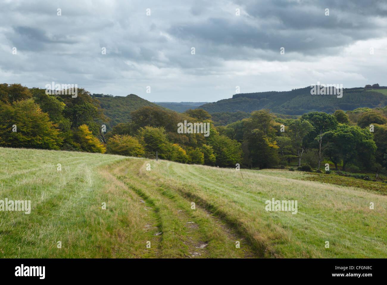 Exe Valley Way near Hawkridge. Exmoor National Park. Somerset. England. UK. - Stock Image
