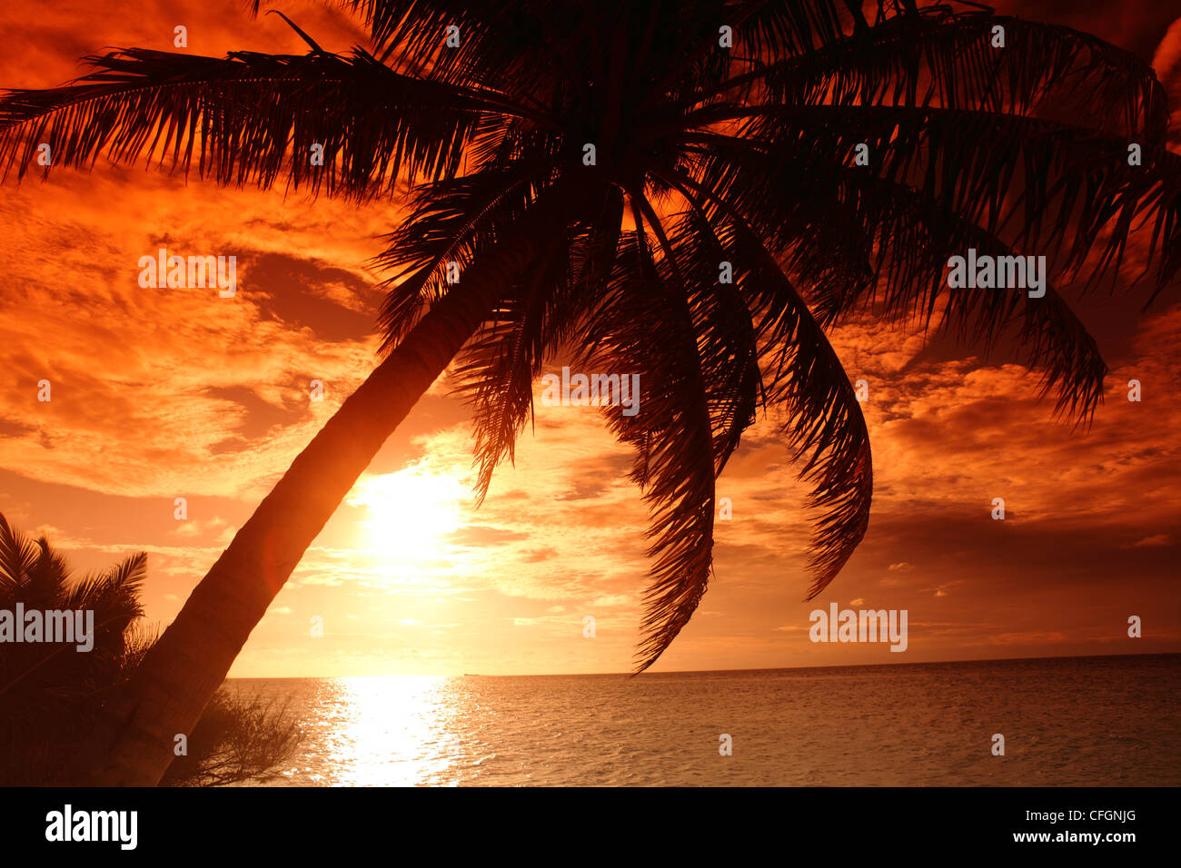 Palm on the beach at sunset, Filitheyo island, Maldives Stock Photo