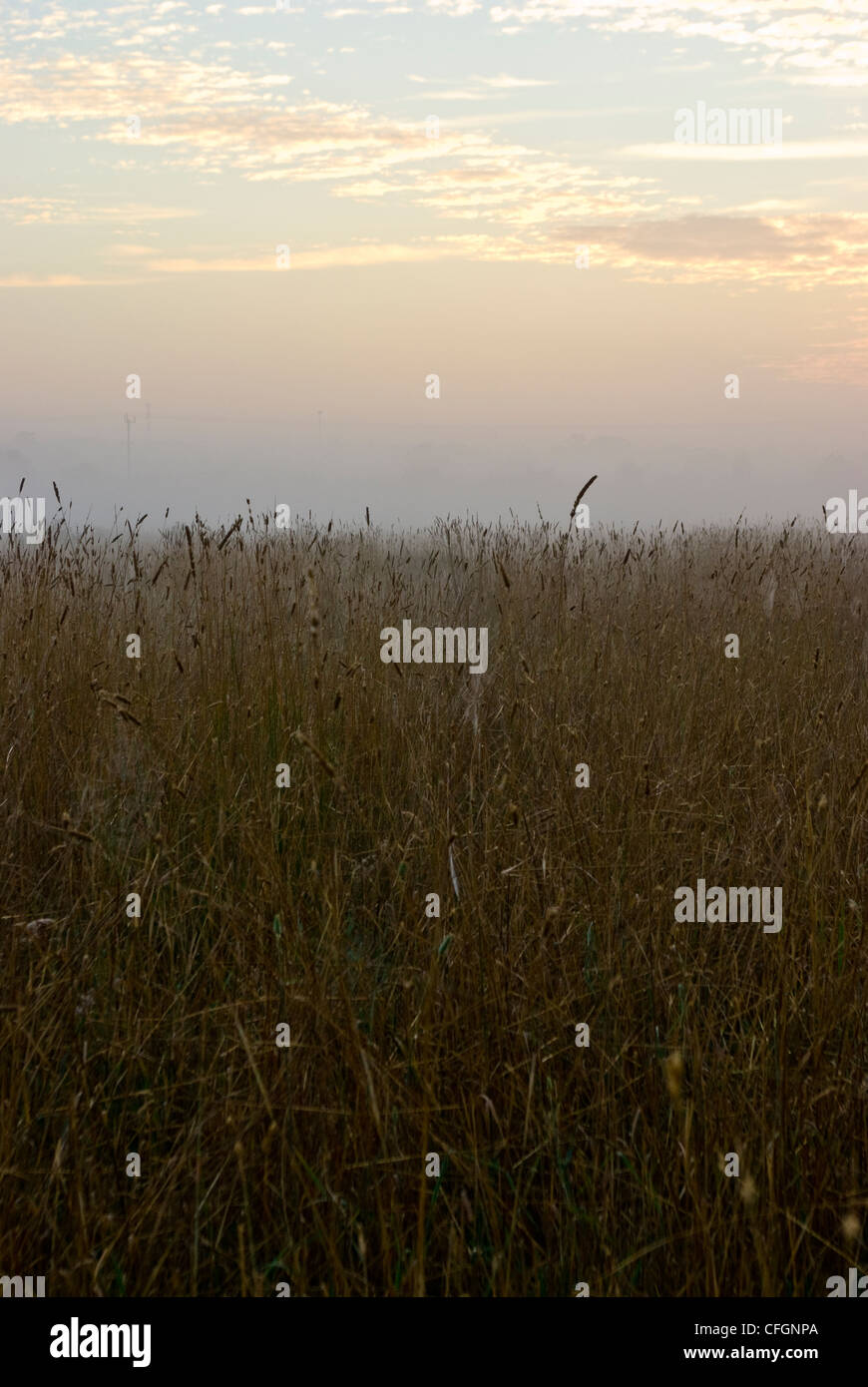 Winter dew drops and fog over a farm field and dry wheat at dawn. - Stock Image