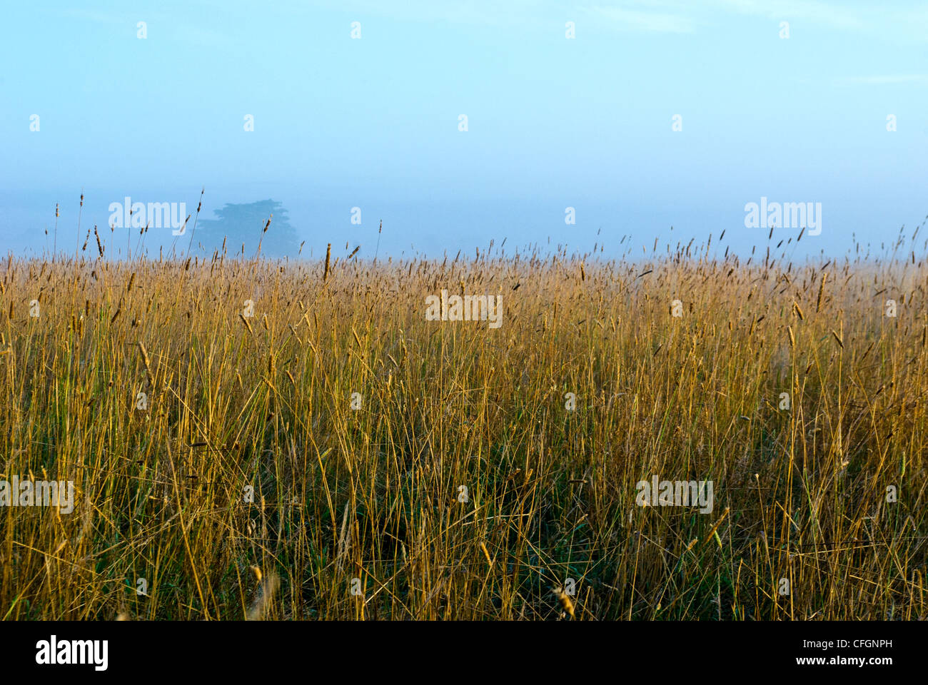 Dawn rises and dissipates winter fog over a farm field of dry wheat. - Stock Image
