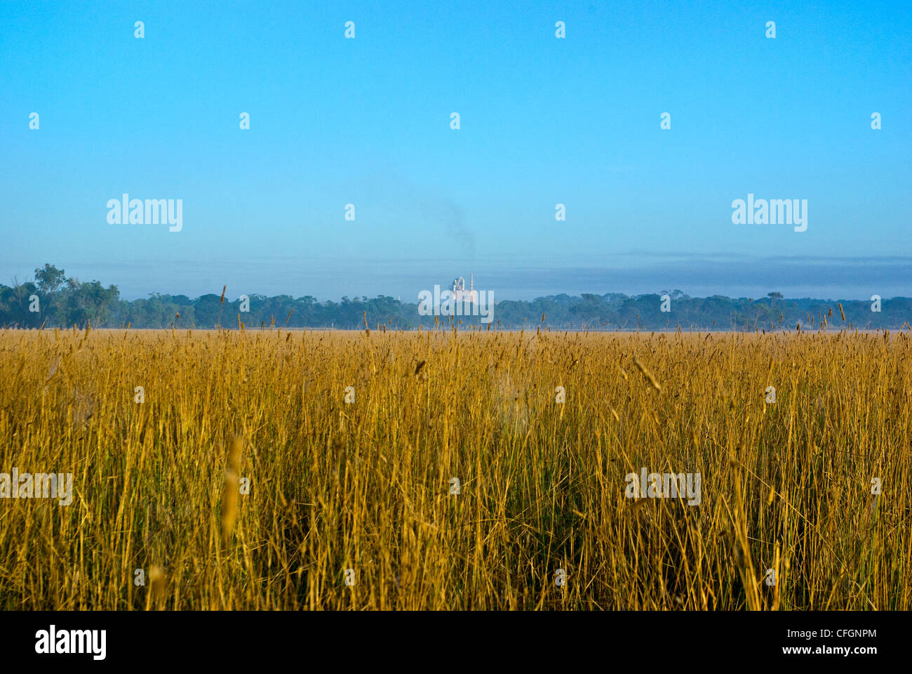 A cement factory rises over a line of trees and a farm field of wheat. - Stock Image