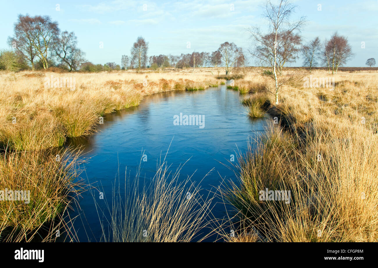 Grassland with Womere pool in mid-winter Cannock Chase Country Park AONB (area of outstanding natural beauty)  Staffordshire - Stock Image