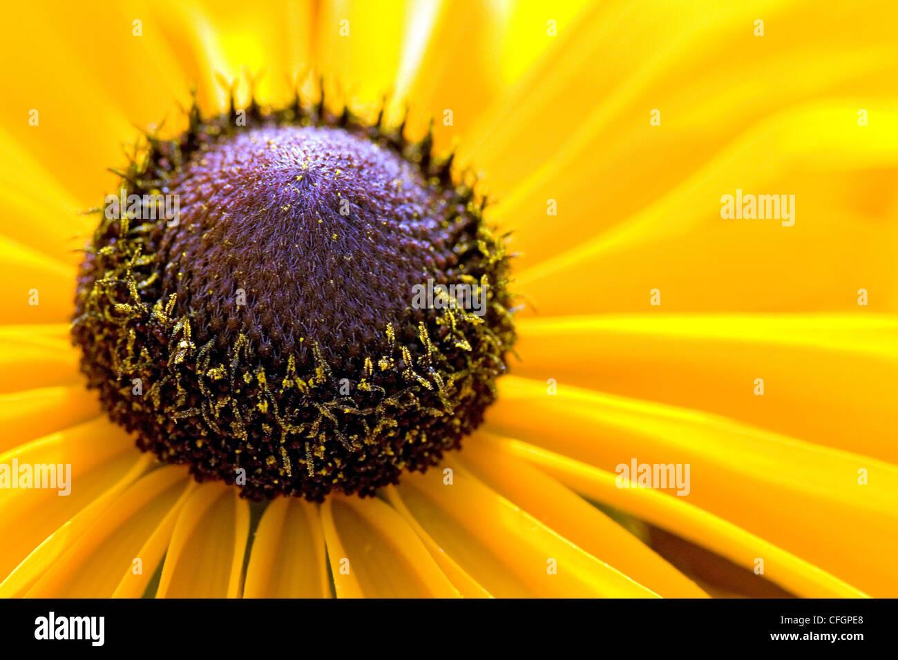 Close up shot of yellow flower's pistil Stock Photo