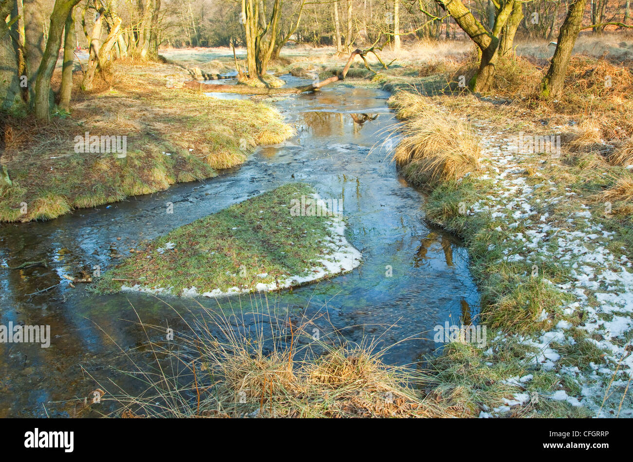 Severe frost in mid-winter, Sherbrook Valley, Cannock Chase Country Park AONB (area of outstanding natural beauty) - Stock Image