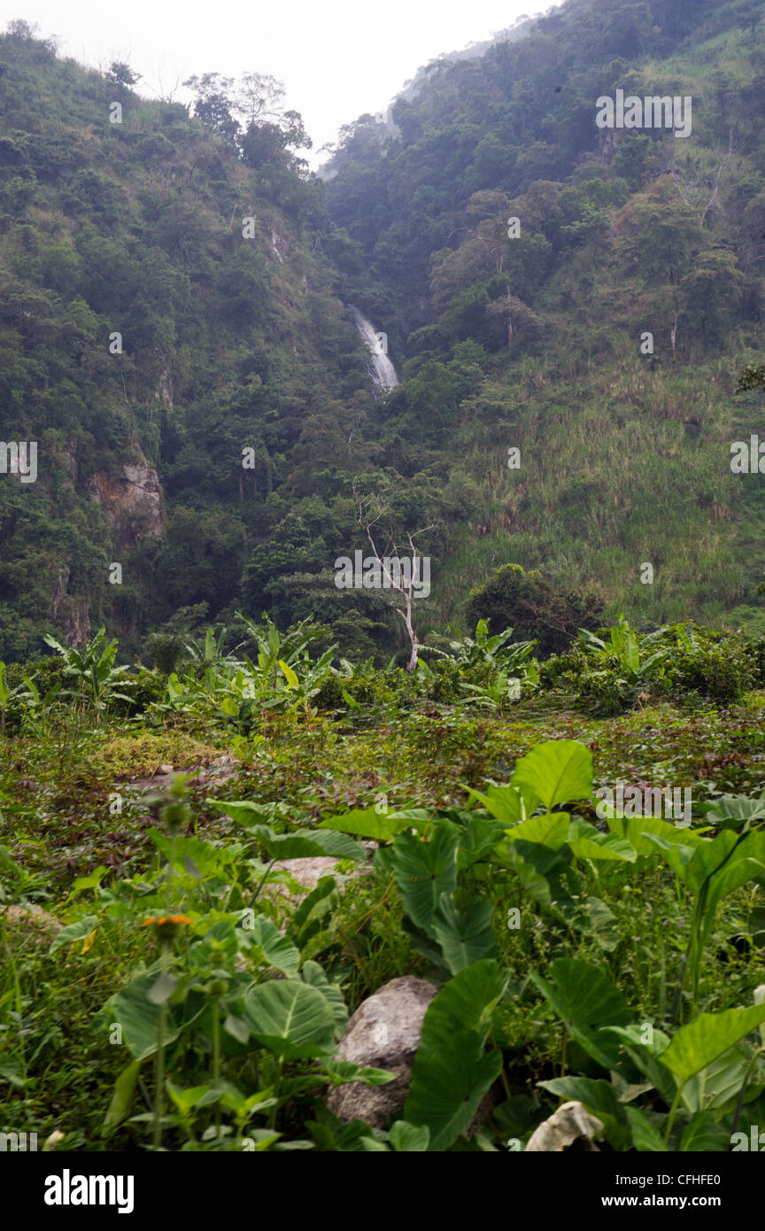 Waterfall in the Rwenzori Mountains near Bundibugyo, western Uganda. - Stock Image