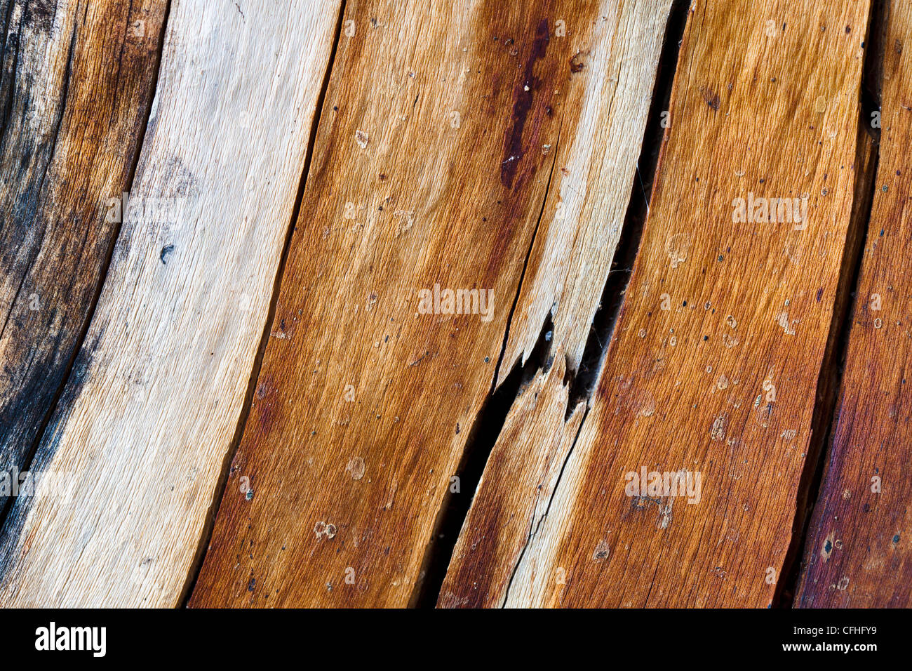 Close up of dead pine tree Tirol, Austrian Alps. August. - Stock Image