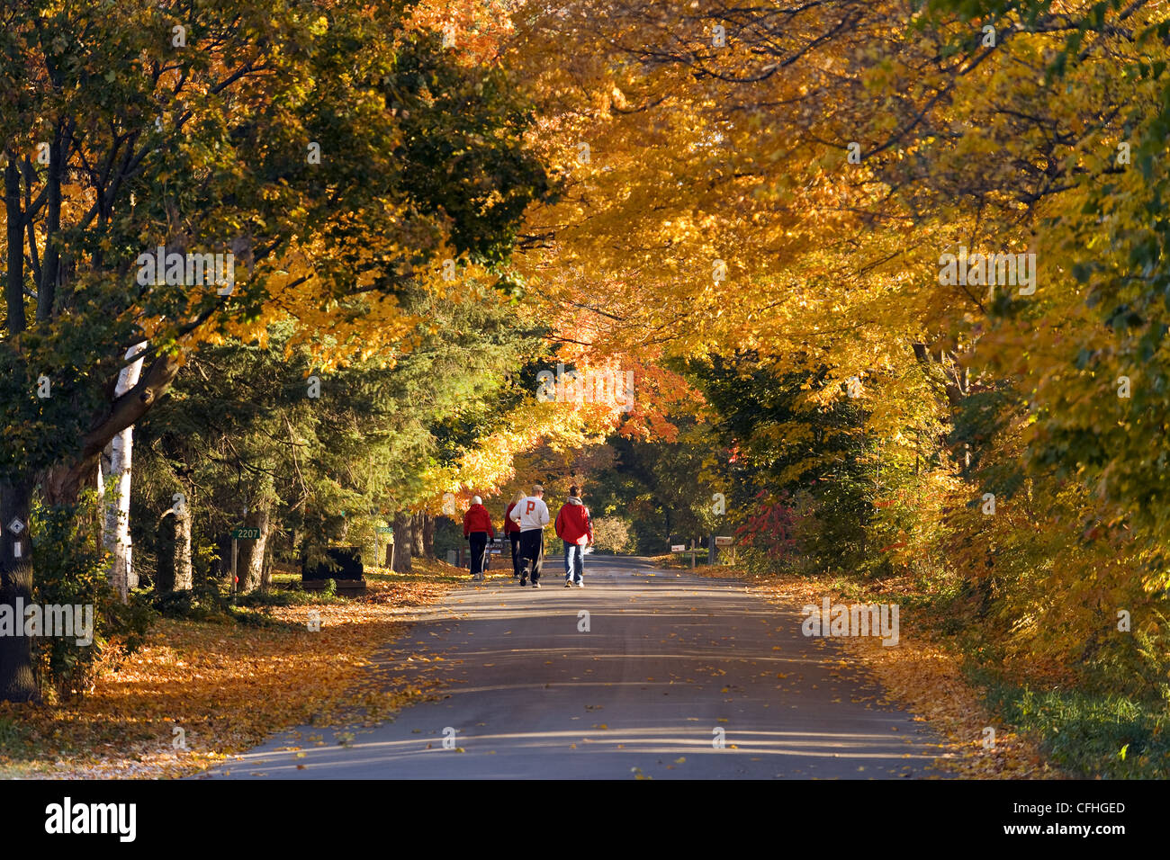 Walking under an autumn canopy - Stock Image