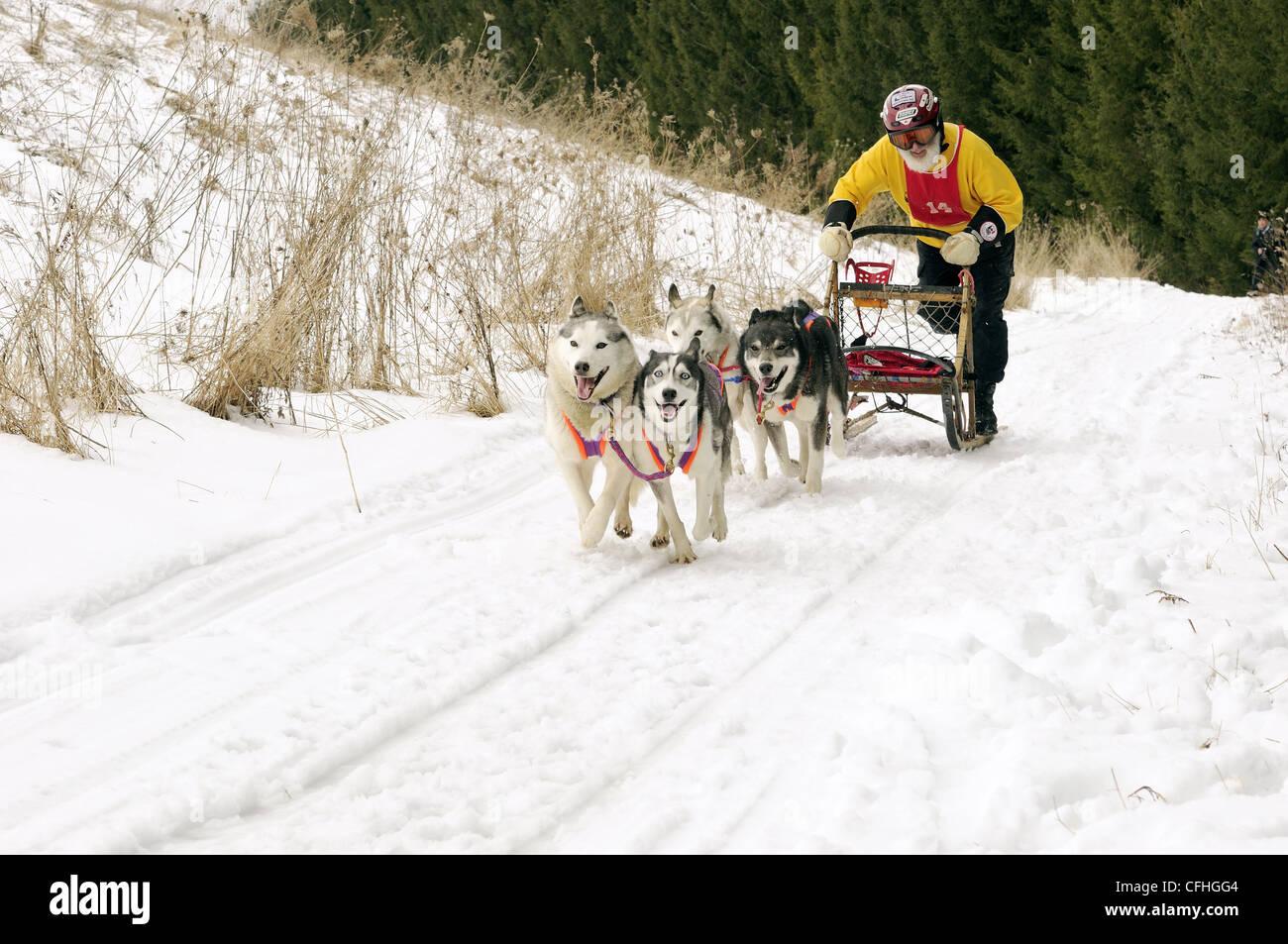 Dog sled race - Stock Image