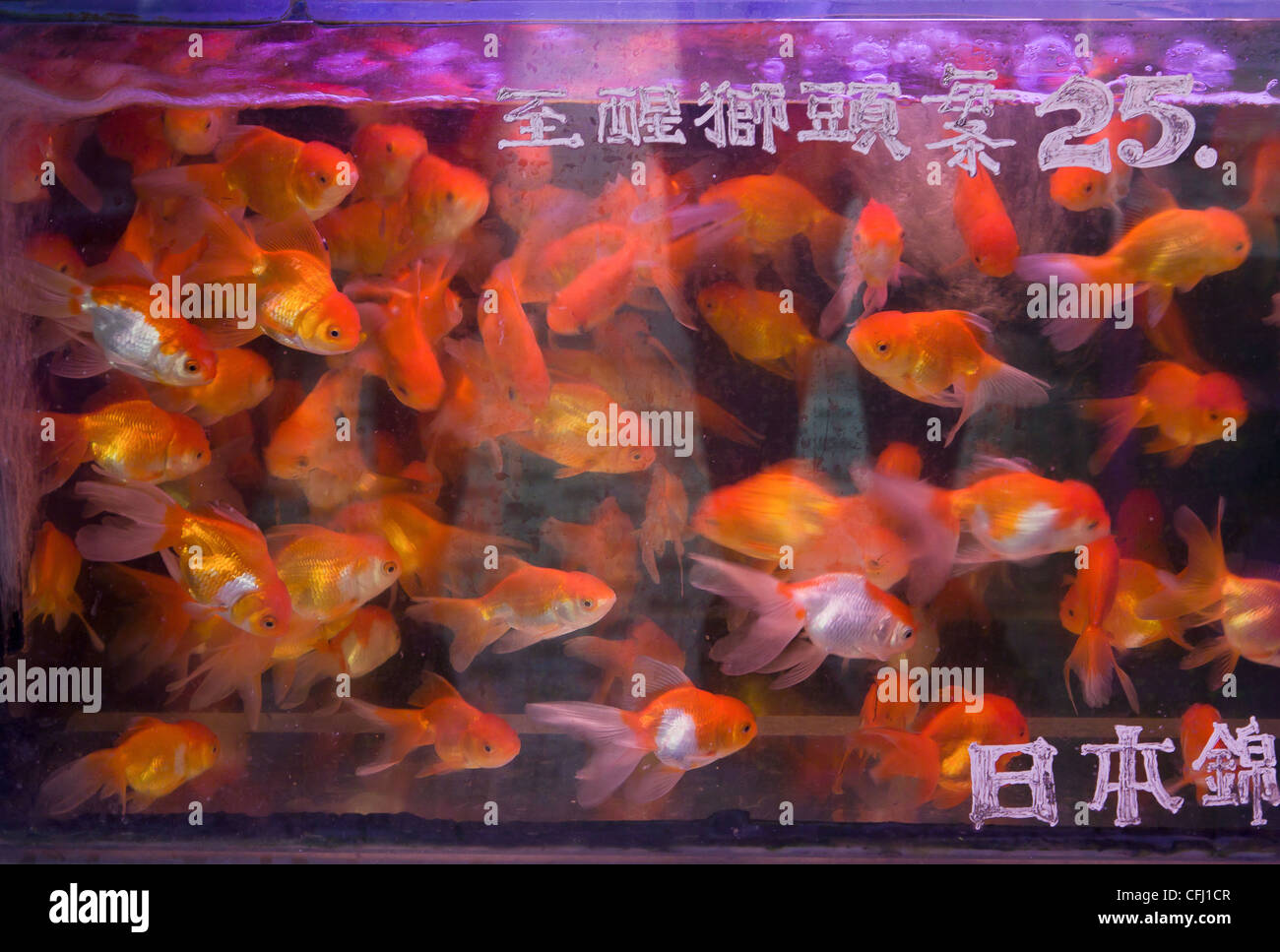 Pet Gold Fish Stock Photos & Pet Gold Fish Stock Images - Alamy