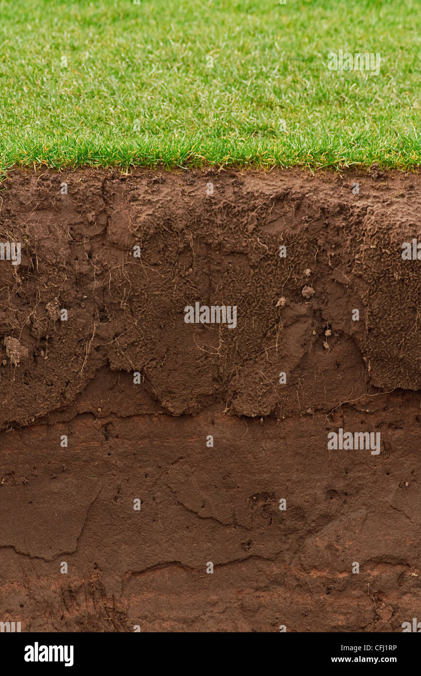 cross section of a grass lawn with exposed soil below - Stock Image