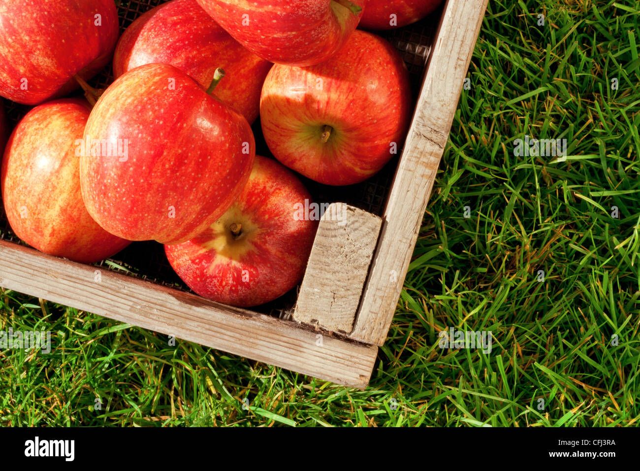 Still life photo of freshly picked red apples in a wooden crate on grass. - Stock Image