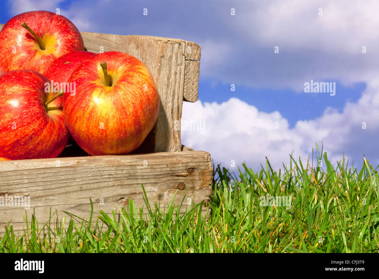 Still life photo of freshly picked red apples in a wooden crate on grass against a blue cloudy sky. Stock Photo