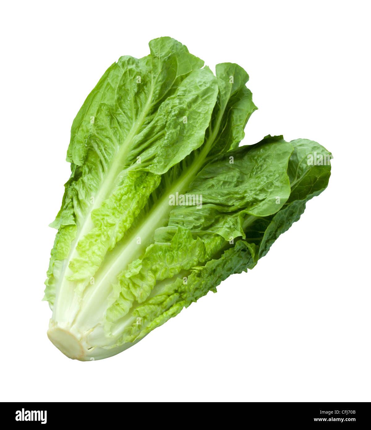 Romaine Lettuce isolated on white - Stock Image