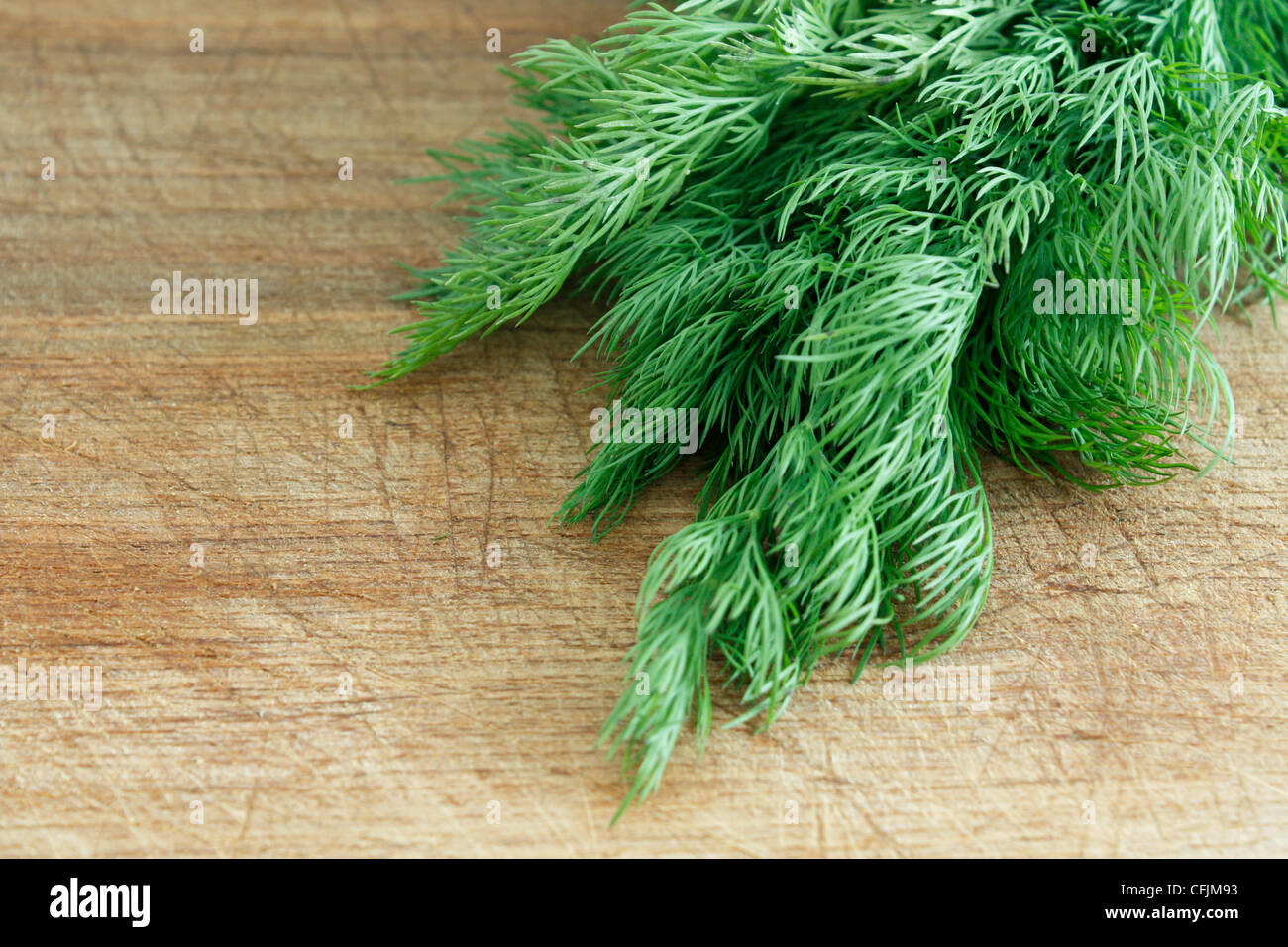 Delicious fresh dill from the garden - Stock Image