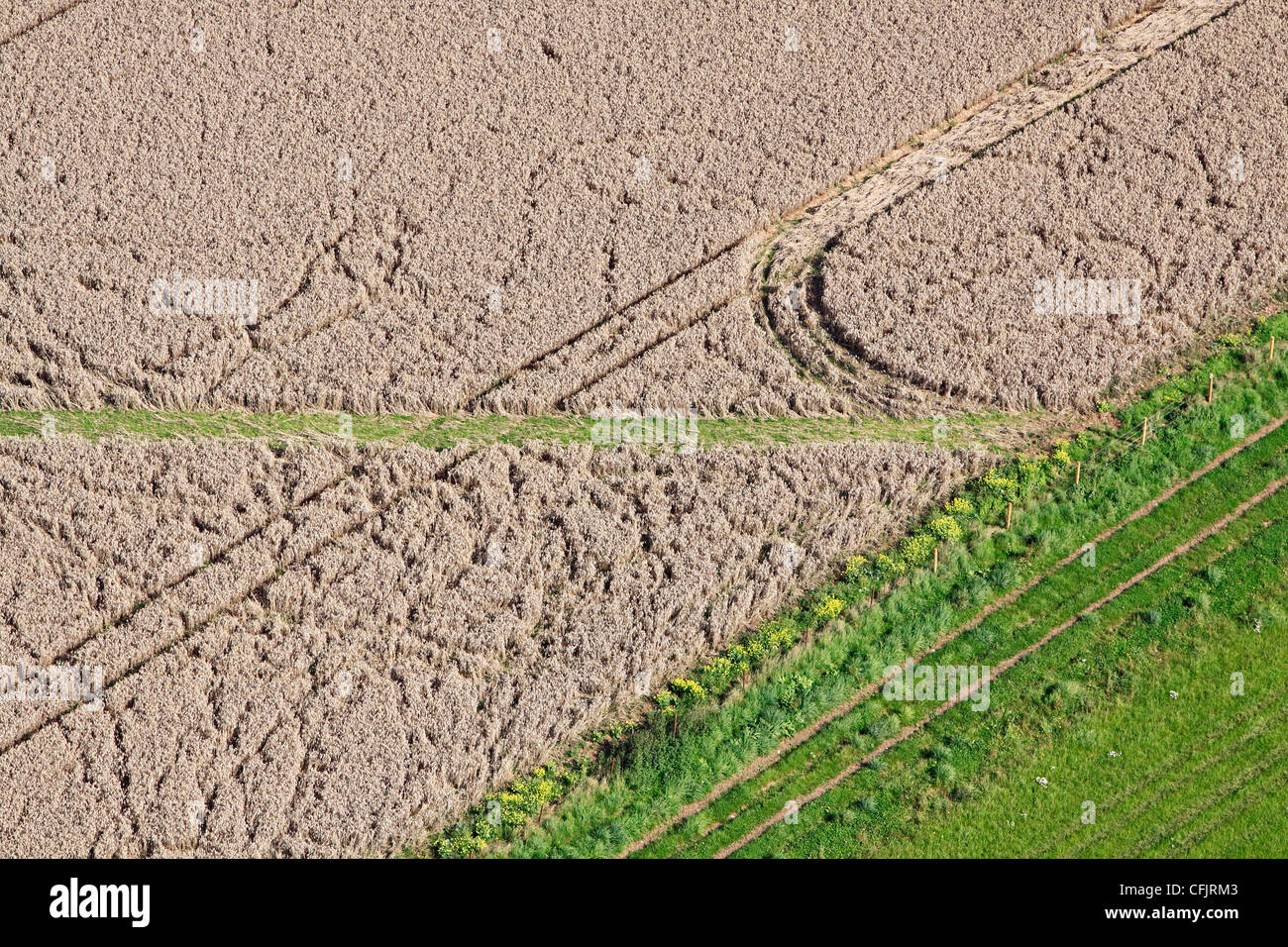 Aerial view of crop damage in a field of wheat - Stock Image
