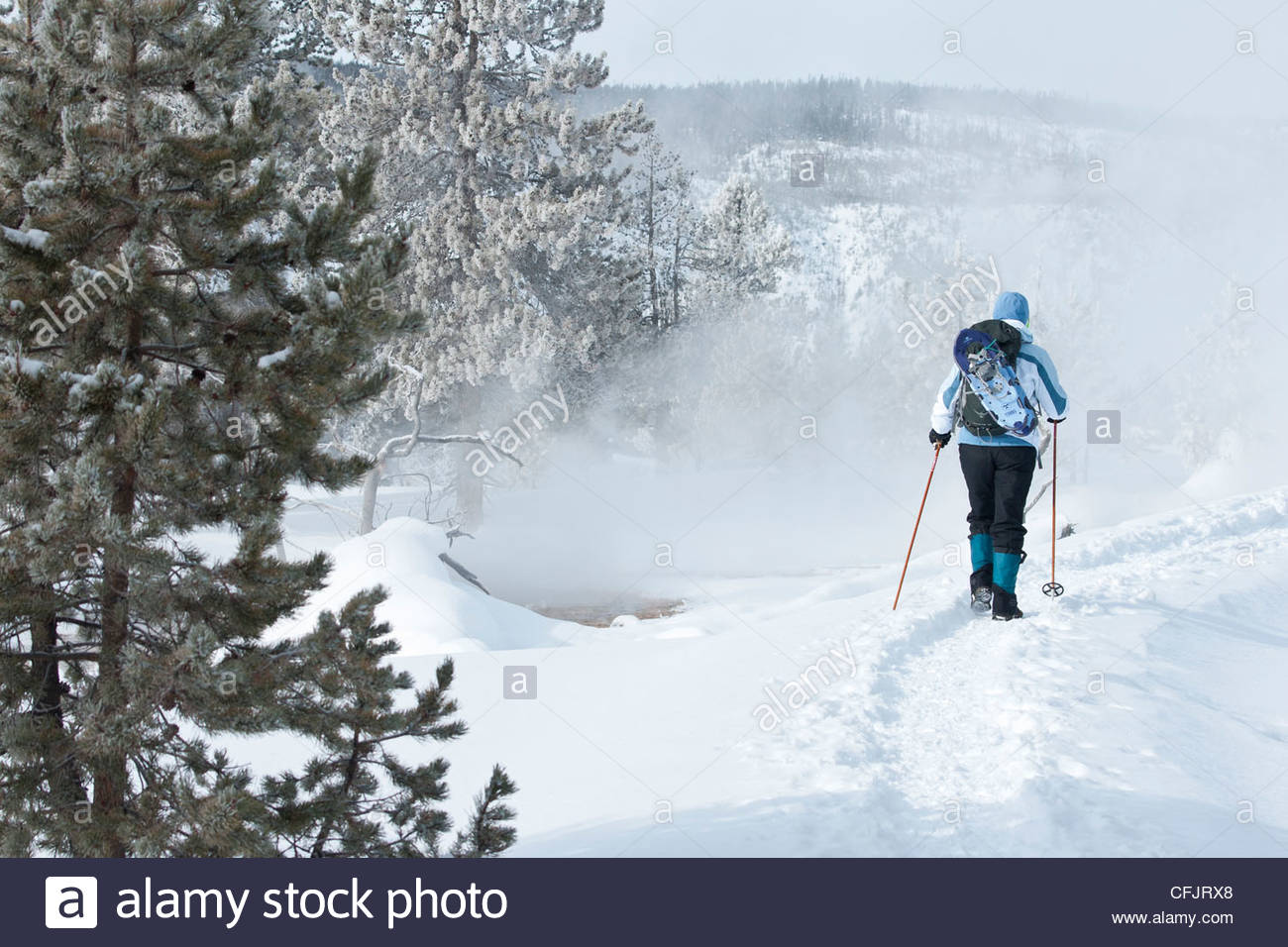Snowshoer on winter trail, Wyoming, United States of America, North America - Stock Image